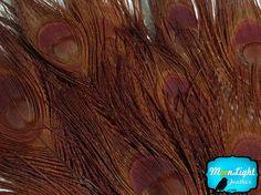 Wholesale Peacock 50 Pieces Wholesale by MoonlightFeatherInc