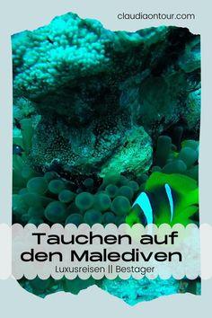 Tauchen auf den Malediven. Tauchen rund um Lily Beach. Tauchen im indischen Ozean. Luxusreisen Malediven.