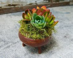 succulents in chocolate dish w/ feet by greenwaredesign at etsy
