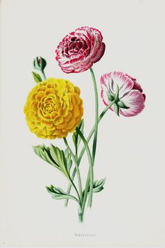 1887 Antique FLOWER print color lithograph by TwoCatsAntiquePrints, $16.95