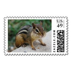 $$$ This is great for          Chipmunk Cheeks Postage Stamps           Chipmunk Cheeks Postage Stamps We have the best promotion for you and if you are interested in the related item or need more information reviews from the x customer who are own of them before please follow the link to see ...Cleck Hot Deals >>> http://www.zazzle.com/chipmunk_cheeks_postage_stamps-172760666169004449?rf=238627982471231924&zbar=1&tc=terrest
