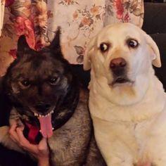 My two goofballs - Imgur