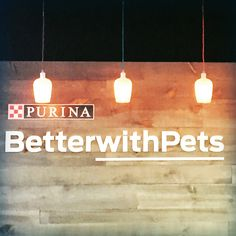Cat Chat With Caren And Cody: Purina's #BetterWithPets Summit 2015: Emotional Wellness and the Bond Between Pets and their People #Sponsored Part I