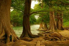 Guadalupe State Park, Texas