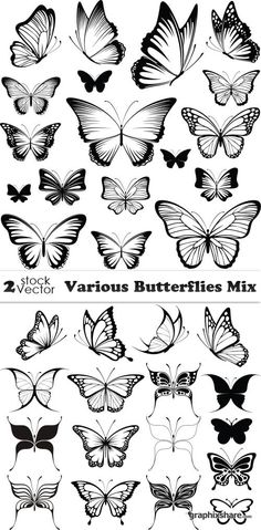 Vectors - Various Butterflies Mix Stencil Wall Art, Butterfly Quilt, Pyrography, Painted Rocks, Vectors, Vector Vector, Paper Art, Coloring Pages, Art Projects