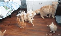 Mom accidentally scaring her kittens. I seriously think that this is my new favorite gif!