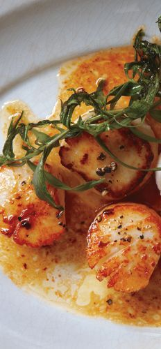 with Herbed Brown Butter Seared scallops with herbed brown butter recipe: a. what you're having for dinner tonightSeared scallops with herbed brown butter recipe: a. what you're having for dinner tonight Fish Recipes, Seafood Recipes, Dinner Recipes, Healthy Recipes, Clam Recipes, Sweet Recipes, Healthy Food, Recipies, Seafood Scallops
