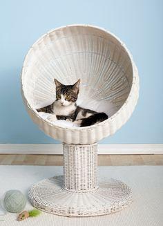 Laat je kat slapen als een koning   | roomed.nl