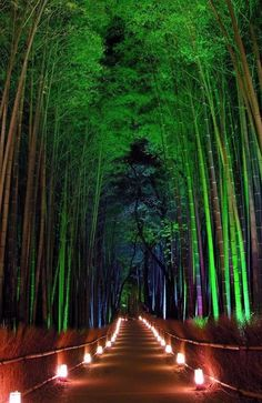 Sagano Bamboo Forest, or as it is often called Arashiyama Bamboo Grove, is a picturesque alley filled with thousands of bamboo trees.