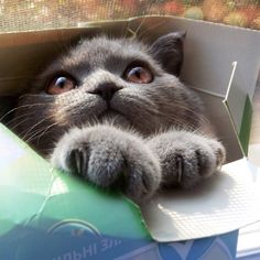 Jack - oops - Cat in a Box
