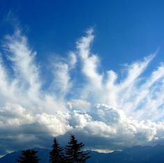 Angels in the Clouds | angel clouds | Flickr - Photo Sharing! Angel Clouds, Sky And Clouds, All Nature, Amazing Nature, Beautiful Sky, Beautiful Pictures, Angel Sightings, I Believe In Angels, Cloud Art
