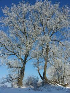 Winter auf Usedom 2015