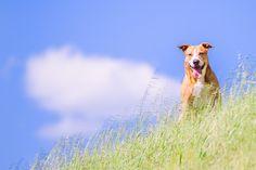Spring-a-licious! 5 Ideas for Spring Pet Photos | Pretty Fluffy | Pretty Fluffy