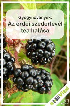 Medical, Herbs, Fruit, Health, Food, Medical Doctor, Salud, Essen, Herb