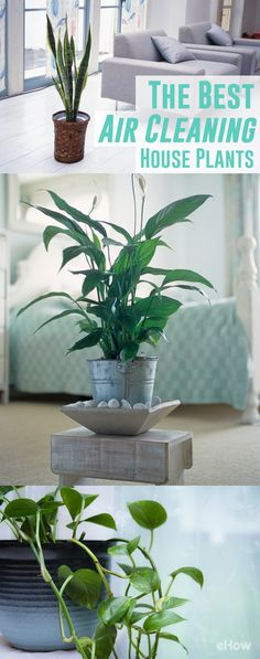 Which Houseplants Are Best for Cleaning the Air? | eHow