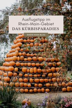 Herbst Ausflugstipp für das Rhein-Main-Gebiet: Das Kürbisparadies in Weiterstadt - Rhein-Main-Blog