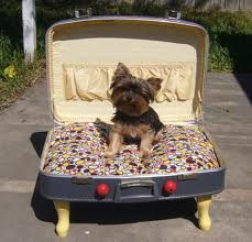 Cute pet bed out of old chair and suitcase. Picked up an old briefcase , could make this out of that too.