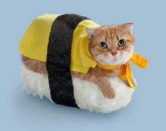 Cat Sushi Combines Japan's Two Favorite Obsessions  ... see more at PetsLady.com ... The FUN site for Animal Lovers