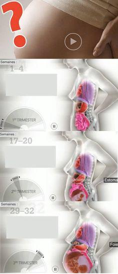 VIDÉO : comment réagit le corps à la grossesse ? #enceinte #grossesse