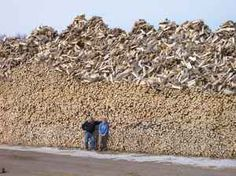Looks like someones got a few logs chopped up ready for Winter.