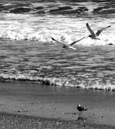 Black & White Of Sea Gulls At Jersey Shore Surf Love's Photo Album