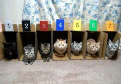Store your cats in numerical order.