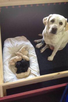 23 mamás orgullosas que tienen las familias más hermosas - ¡Qué cachorros!