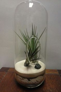 Hanging Capsule Terrarium with two perfect Tillandsias on a multi-textured, multi-layered sand bed.