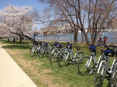 Blossoms by Bike