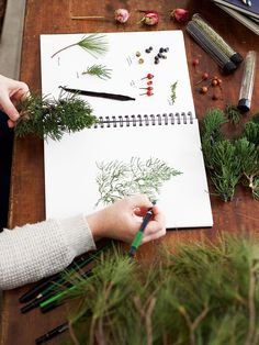 50805efd800 Botany   Wildcrafting Course – start your foraging adventures!