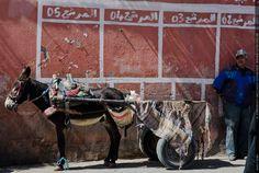 Fotografie Matthias Schneider 160317 25301 Marrakesch Esel wartet