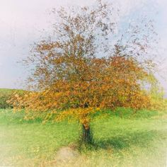 Autumn tree - Limited Edition 1 of 15 Autumn Trees, Plants, Photography, Art, Fall Trees, Art Background, Photograph, Fotografie, Kunst