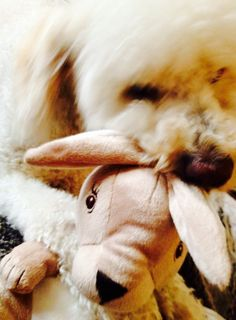 For being a good boy, Cooper gets a new bunny PHOTO BY MRS ROBERTS
