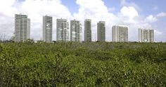 Young environmentalists in Mexico have permanently suspended a development in Cancún that would have cleared a large chunk of a mangrove forest. Cancún is Mexico's