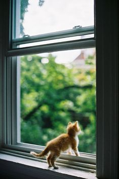 It's a Big World out there ~ Ginger Kitten looking out of the Window ....