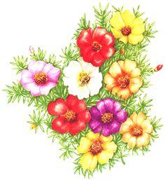 flores coloridas - Pesquisa Google