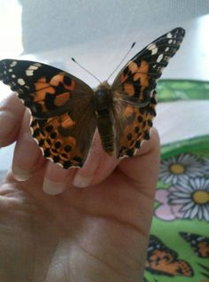 Thank you Stephanie Walker for a beautiful photo of a Painted Lady!
