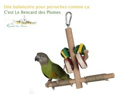 Parrot, Bird, Animals, Budgie Toys, Budgies, Parrots, Exotic Birds, Playground, Home