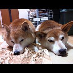 Sleepheads...
