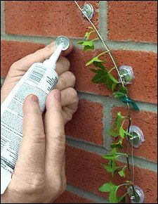 Interesting idea instead of a trellis for guiding a vine up a wall