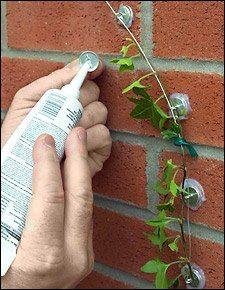 Enredadera    ¡Crea la figura que quieras para tus plantas!  Para hacerlo necesitas utilizar pegamento de silicón para pegar los ganchos a la pared. Después pasa un alambre a lo largo de los ganchos para que puedas utilizar scotch de vinil y ayudar a tu plantita para que siga el camino.