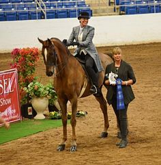 For Sale: King Coconut. After practicing hard all Winter the 2015 horse show season is off to a great start. Perfect practice makes for success in the show ring. King Coconut with Sarah Smith up.