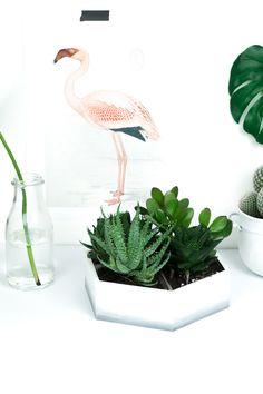 DIY Ombré Mini Sukkulenten Garten für drinnen & draußen: Mit meiner Upcycling Idee zeige ich euch, wie ihr aus einer Teebox aus Holz eine tolle Deko basteln könnt! Perfekt für das Urban Jungle Feeling in eurem Wohnzimmer! Schaut auf meinem Blog vorbei für noch mehr kreative Tutorials!