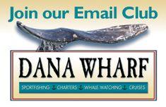 Dana Wharf, fishing fun and whale watching!