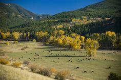 Montana ranch near Bozeman, Montana.