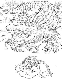 Crocodile hunter coloring pages ~ 32 Best coloring pages - animals images in 2015   Animal ...