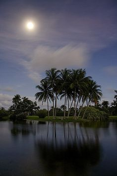Moonrise in Fairchild Tropical Botanic Garden, Miami, Florida