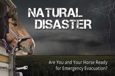 Are you and your horse ready for an emergency evacuation? Test your preparedness and learn potentially life-saving tricks with this new, interactive guide from The Horse and the University of California, Davis, Center for Equine Health. #PetEmergencyPreparednessMonth #horses #horsehealth #disasterprep #evacuation #tornadoes #floods #hurricanes #earthquake