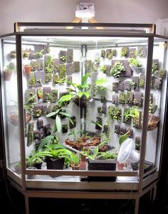 Estufa de cultivo indoor Indoor Greenhouse, Indoor Garden, Indoor Plants, Outdoor Gardens, Greenhouse Ideas, Orchid Terrarium, Succulent Terrarium, Orchid House, Miniature Orchids