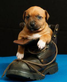 Cute puppy and dog - http://www.1pic4u.com/blog/2014/11/15/suesse-hundebabys-136/